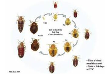 Bedbugs what you should know when you travel