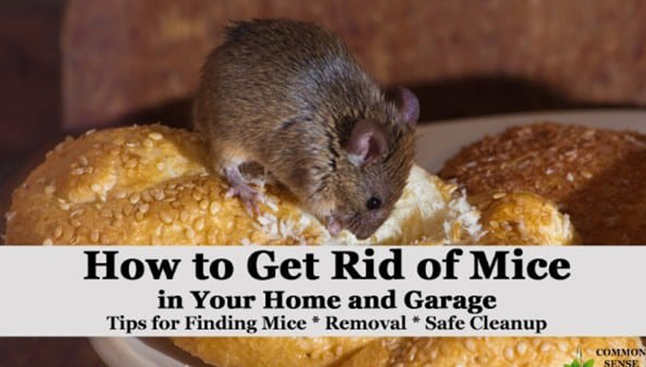 Signs of mice/rats living with you