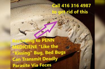 Bed bugs spread Diseases
