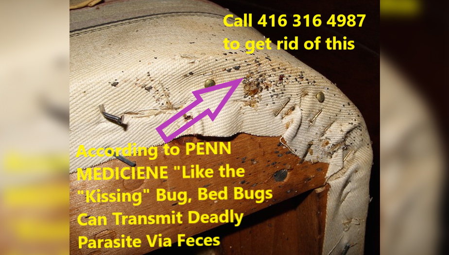 Bed-Bugs-Can